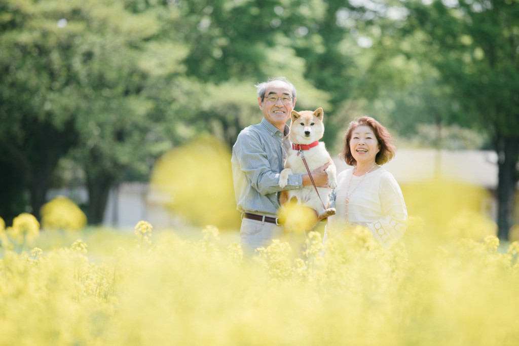 シニアのご夫婦と愛犬菜の花畑の春の公園で
