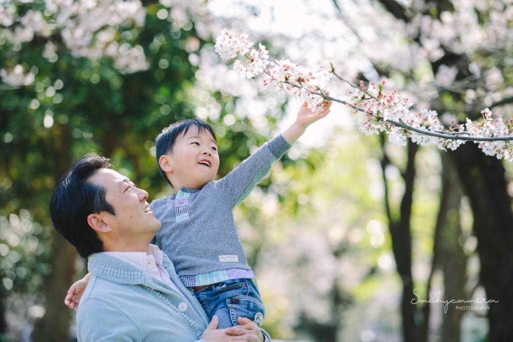 パパと弟くん桜の枝をさわる