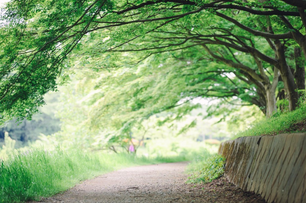 撮影会会場木のトンネル
