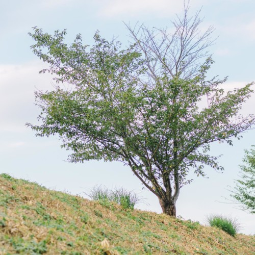 丹原散歩中の景色