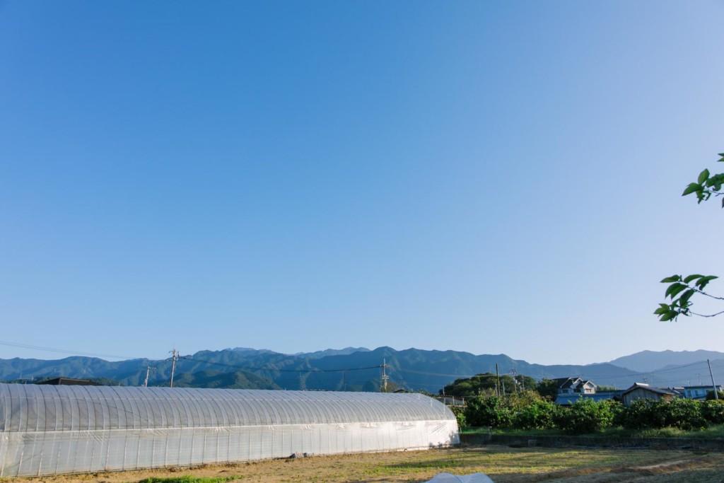 畑からの青空