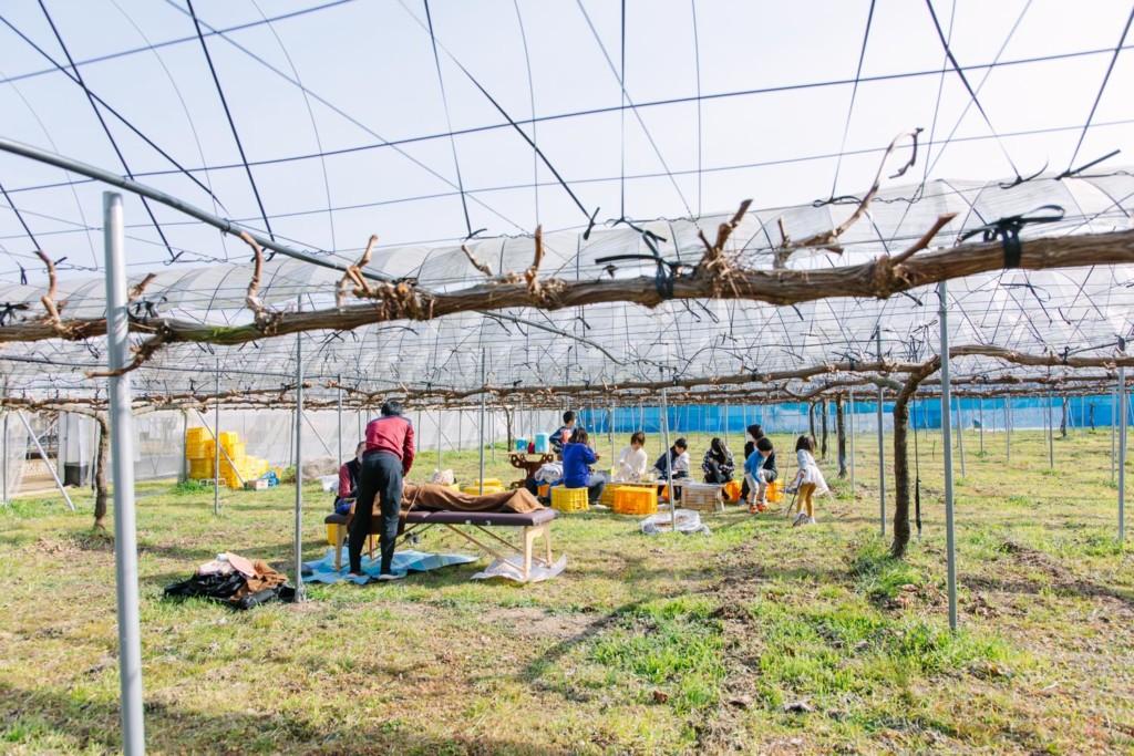 ぶどう畑1日開放DAYの風景