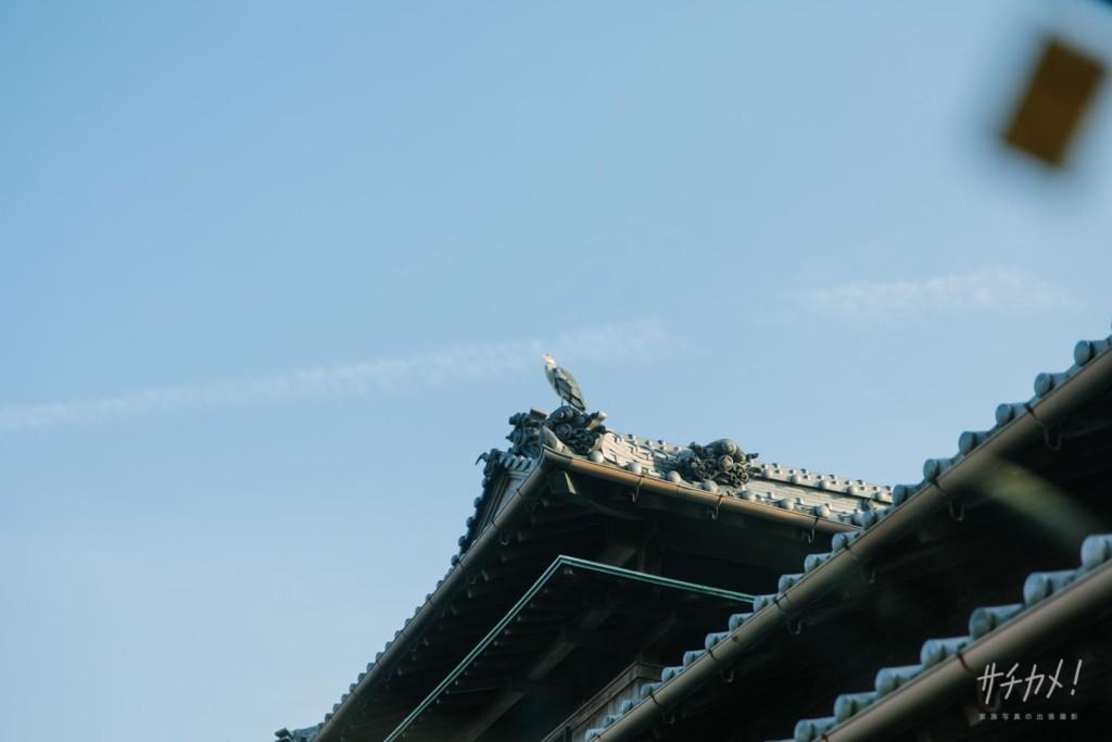 屋根の上の青サギ